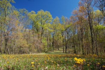 A forest meadow filled with blooming wildflowers provides nectar to bees and butterflies.