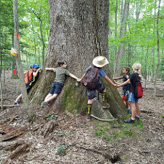 Children hugging a large tree trunk. Photo courtesy of VA State Parks, Flickr.