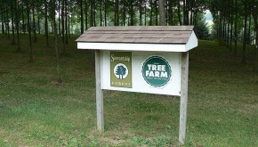 Picutre of Forest Stewardship and Tree Farm System signs on a wooded property.