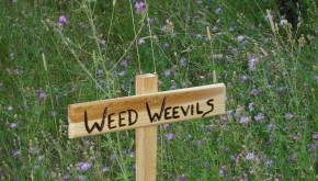 Weed Weevil Sign