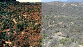 Comparative picture of effects of drought