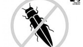 Emerald Ash Beetle Unwanted sign