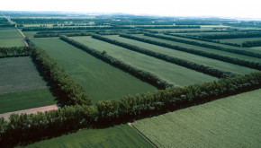 Windbreaks can be designed to protect many sides of a field. Photo Credit: Gene Alexander, NRCS