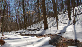 Stream flowing through a snow covered forest.