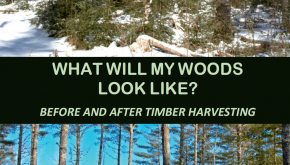 What Will My Woods Look Like?