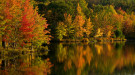 Fall foliage along a lake. Photo by David Whiteman