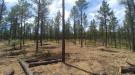 Forest management treatment in ponderosa pine stand. Photo by Rhiley Allbee.