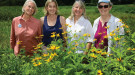 Pollinator Pathway pioneers: Louise Washer, director of the Norwalk River Watershed Association; Donna Merrill, executive director of the Wilton Land Conservation Trust; Mary Ellen Lemay, facilitator for the Hudson to Housatonic Regional Conservation Partnership (H2H), outreach coordinator for the Aspetuck Land Trust and chairman of the Trumbull Conservation Commission; and Kimberly Stoner, who works in the Department of Entomology at the CT Agricultural Experiment Station. Photo: Erik Trautmann