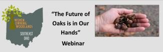 The Future of Oaks is in Our Hands