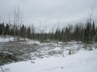 Aspen regeneration cut down in the winter. Downed trees provide wildlife habitat and reserve trees provide seed sources.