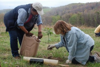 Participants plant native species of shrubs in rocky soil