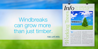 Windbreaks can grow more than just timber.