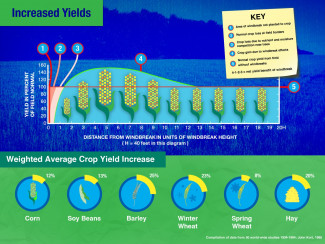 Graphic illustrated windbreaks improve crop yields.