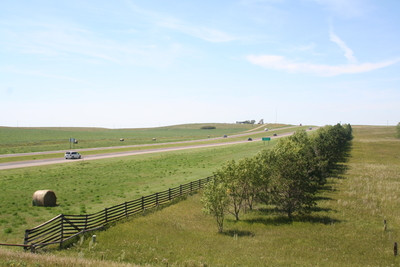 A Line of trees grow parallel to a highway that is surrounded by grasslands.