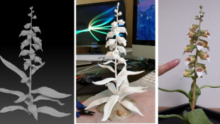 3 stages of Grecian foxglove 3D printed model development