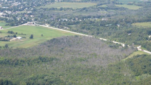 EAB damage by Bill McNee, WI DNR
